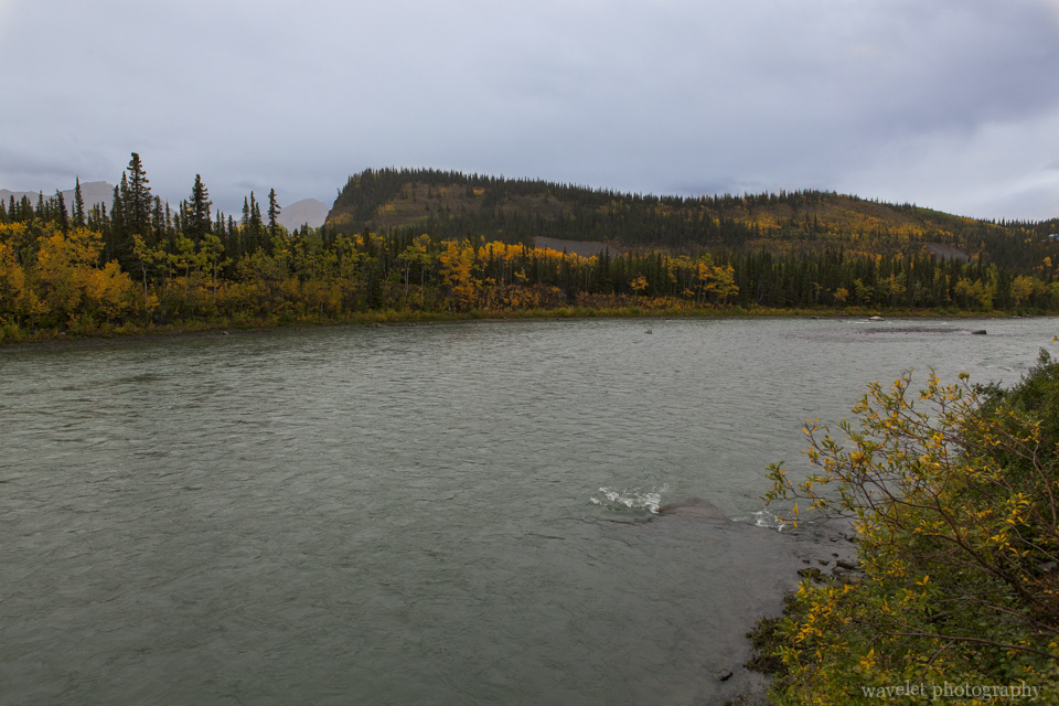 The section of Nenana River where McKinley Village Lodge is located, Alaska
