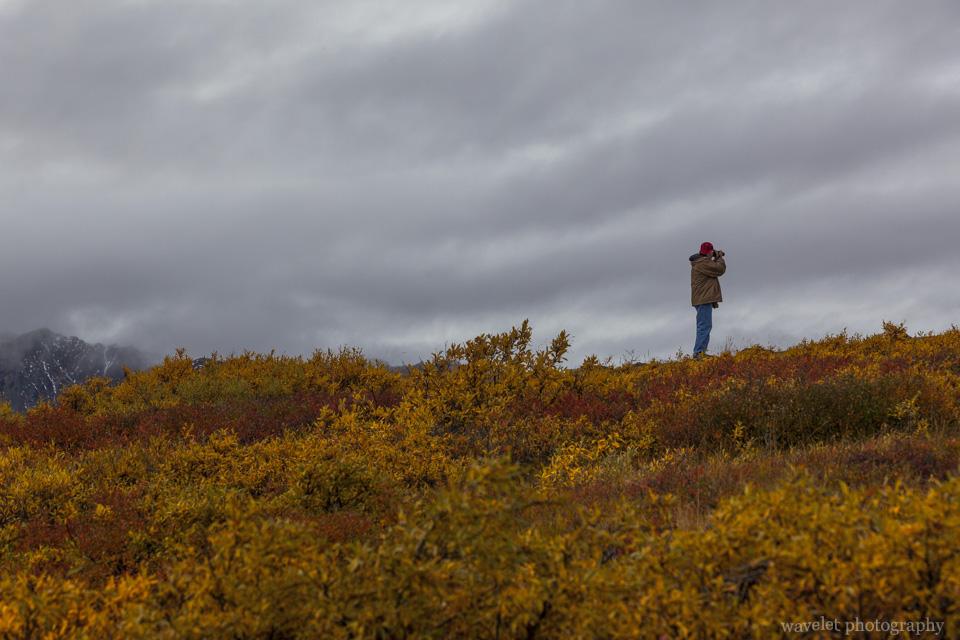Stony Hill Overlook, Denali National Park, Alaska