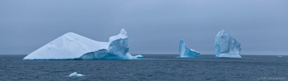Iceberge at Antarctic Sound