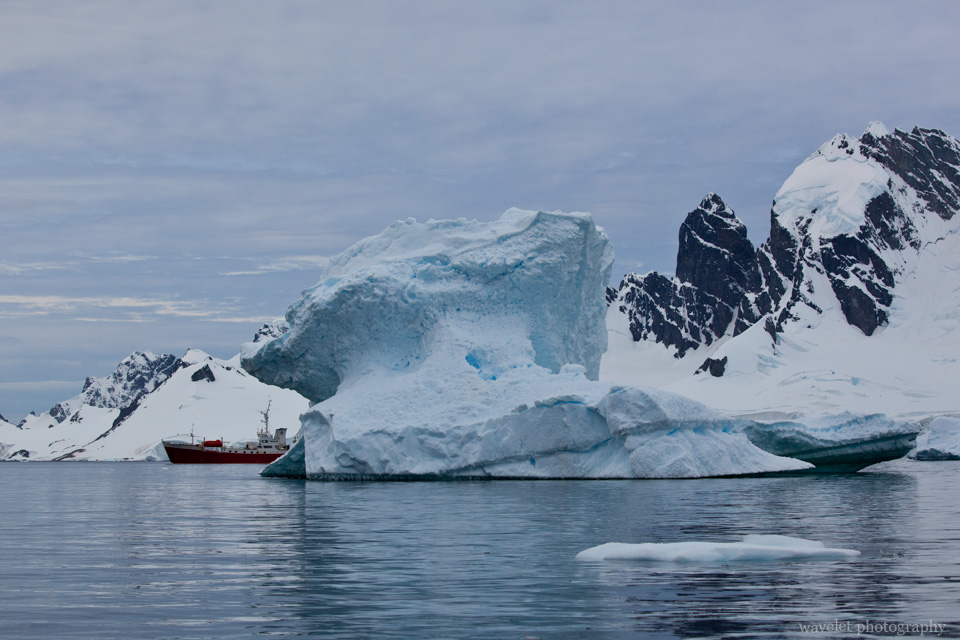 Icebergs, Cuverville Island