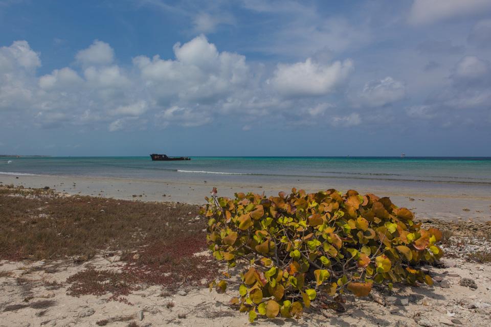 A shipwreck near Malmok Beach, Aruba
