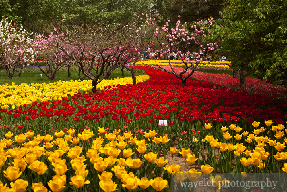 Beijing Botanic Garden (北京植物园)