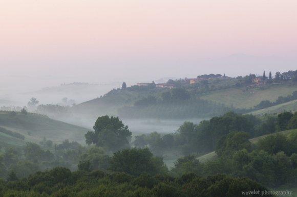 Morning frog, Siena