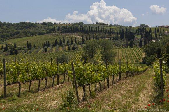 Near Sant'Antimo Abbey, Southern Tuscany