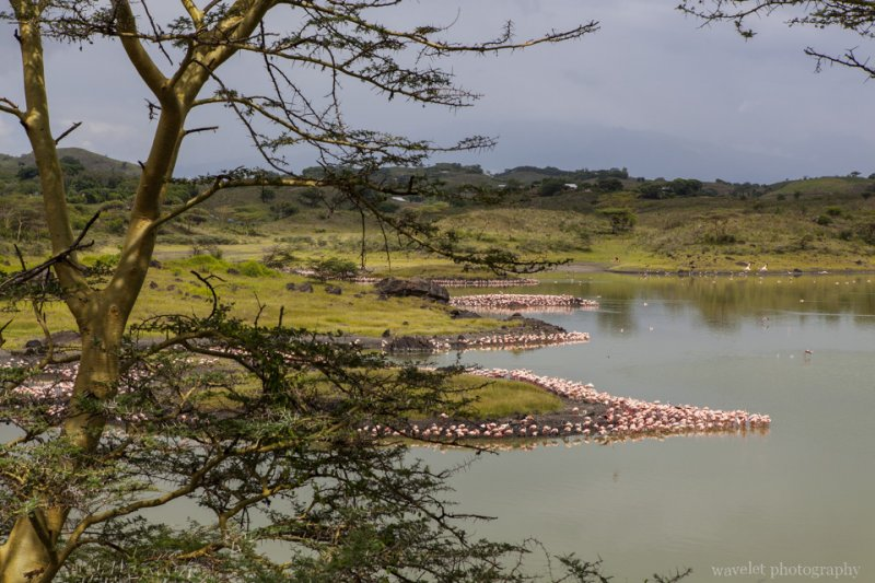 Flamingos at Small Momella Lake, Arusha National Park, Tanzania