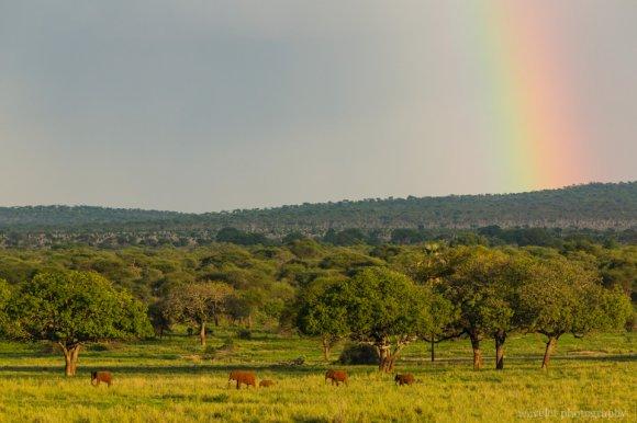 Elephants under the rainbow, Tarangire National Park