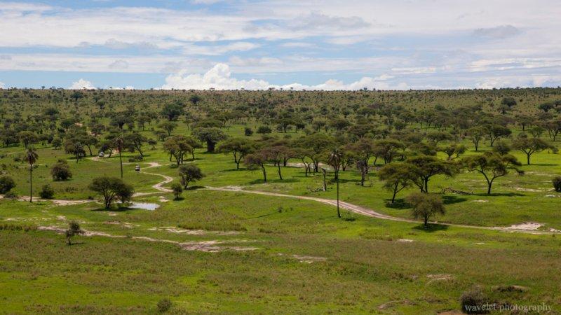 Tarangire National Park Landscape