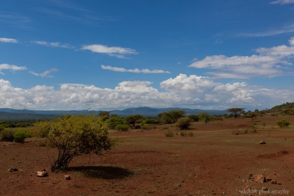 Barren land near Lake Eyasi