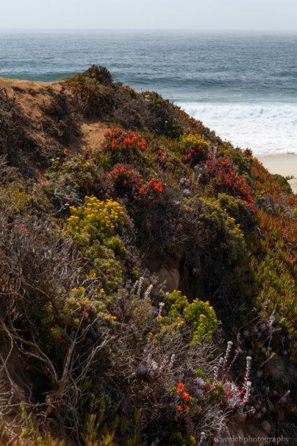 Garrapata Beach, Big Sur, CA