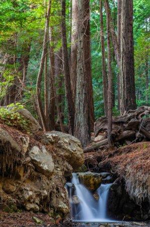 Julia Pfeiffer Burns State Park, Big Sur, CA