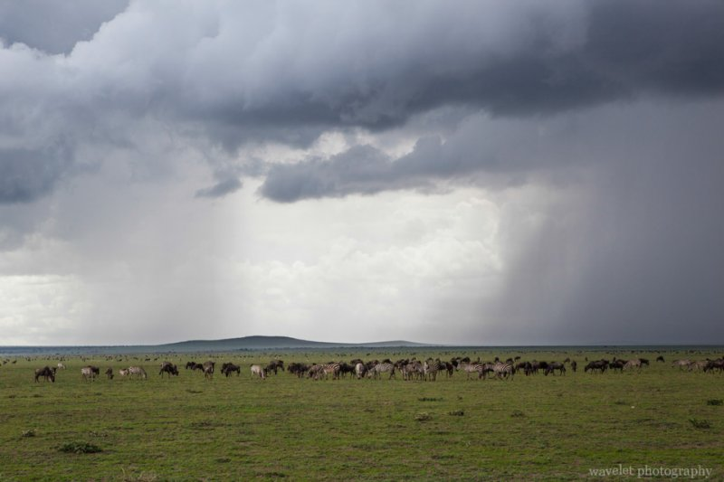 Tunderstorm over Serengeti