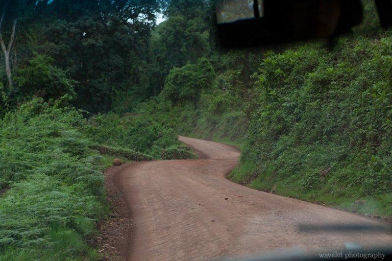 Dense vegetation in south slope of Ngorongoro crater.