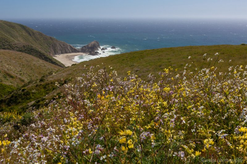 Look back at McClures Beach from Tomales Point Trailhead, Point Reyes