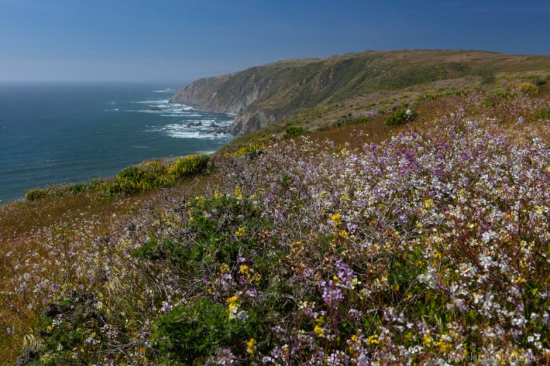 Overlook Tomales Point, Point Reyes