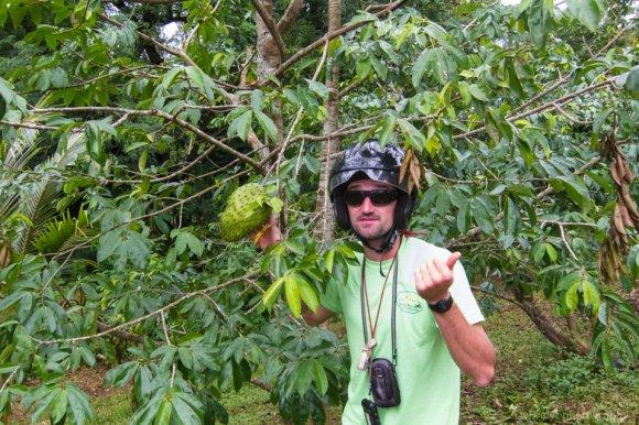 The guide explains vegetations, Moorea ATV Tour