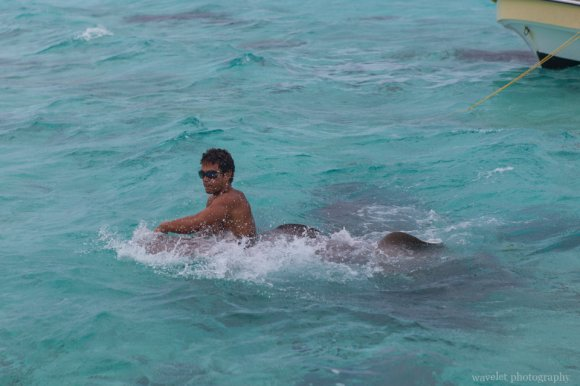 Shark and Ray feeding tour, Bora Bora