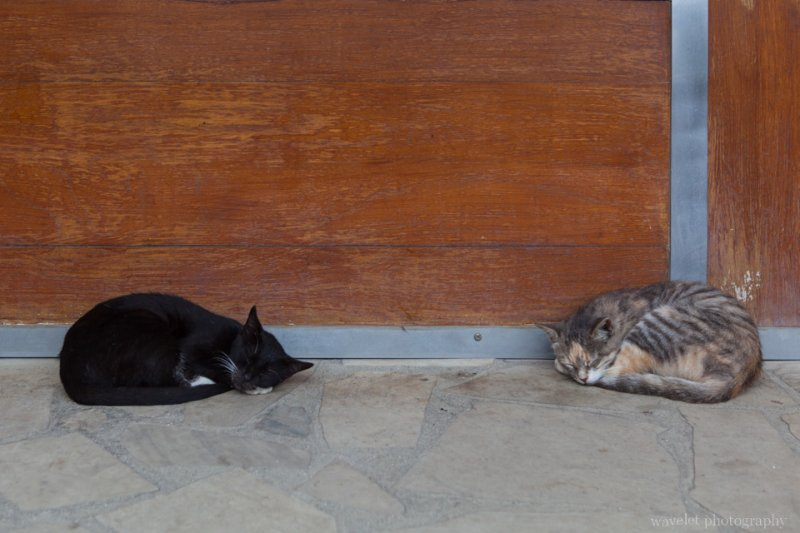 Cats at Viatape, Bora Bora
