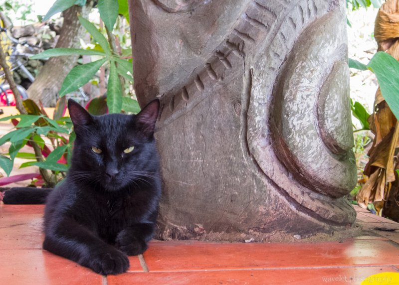 The cat of Hotel Cabanas Koro Nui, Easter Island