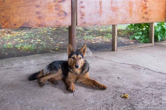 A dog at Rano Raraku, Easter Island