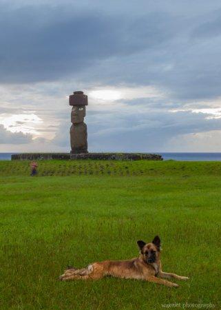A dog at Ahu Tahai, Easter Island