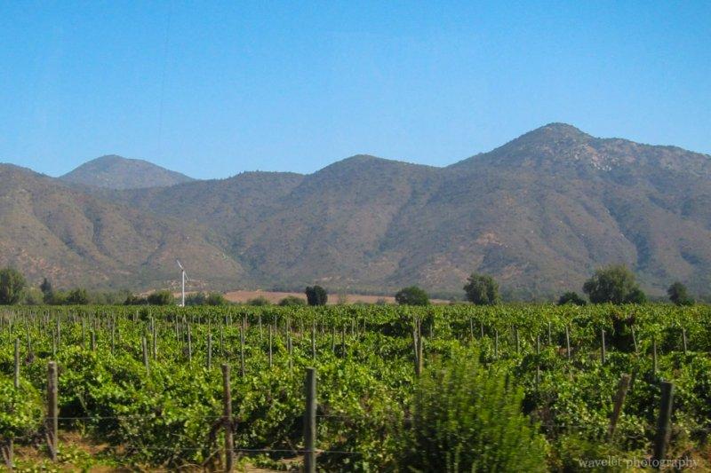 Vineyard between Valparaiso and Santiago