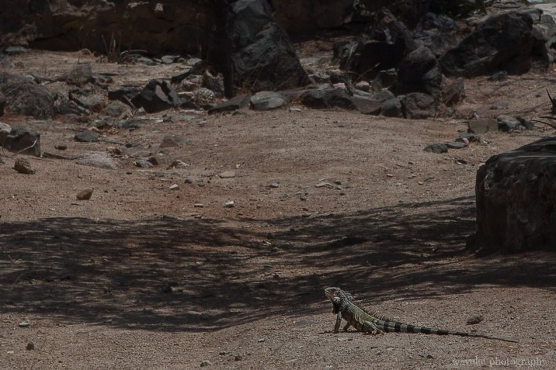 A lizard at Ayo Rock Formations