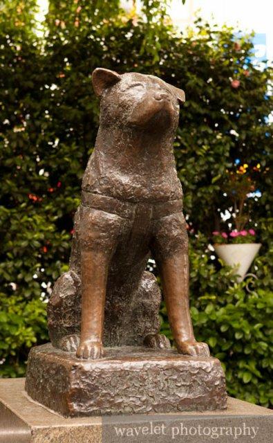 Statue of Hachiko (忠犬公像)