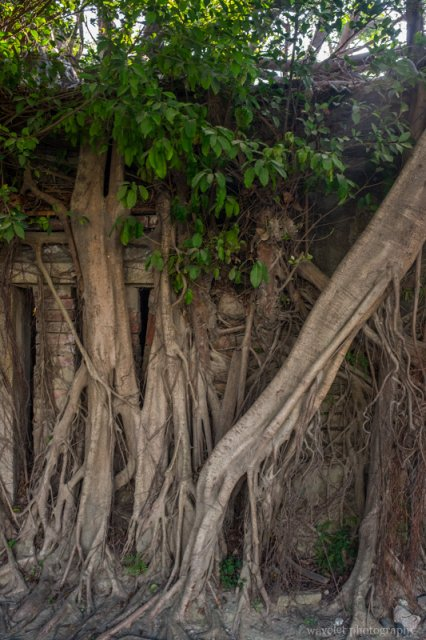 安平树屋,台南