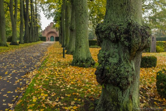 Greyfriars Cemetery (Gråbrødre Kirkegård), Rosklide