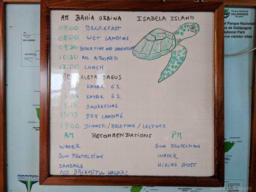 Itinerary of Bahía Urbina and Caleta Tagus, Isabela Island