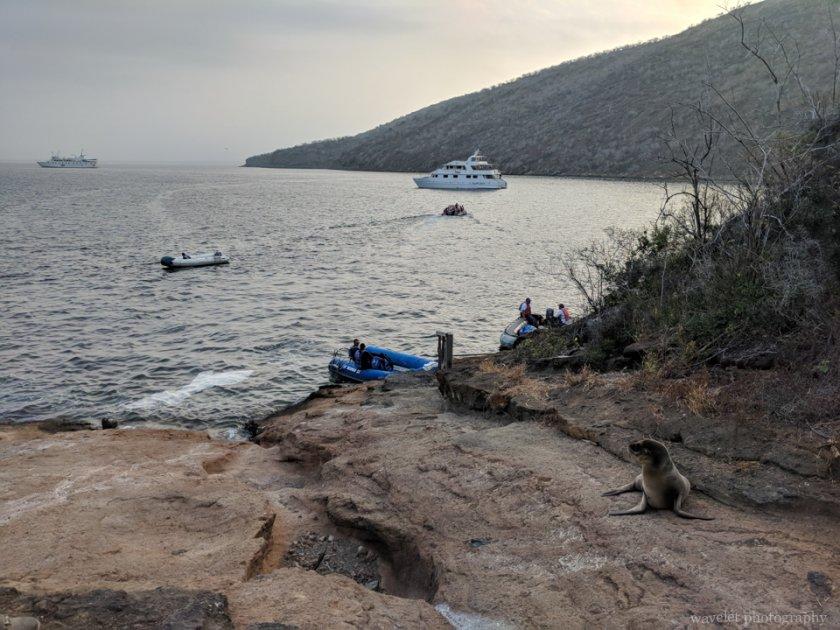 Caleta Tagus, Isabela Island