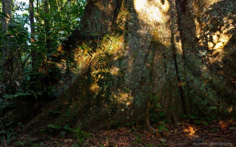 Massive Tree Trunk