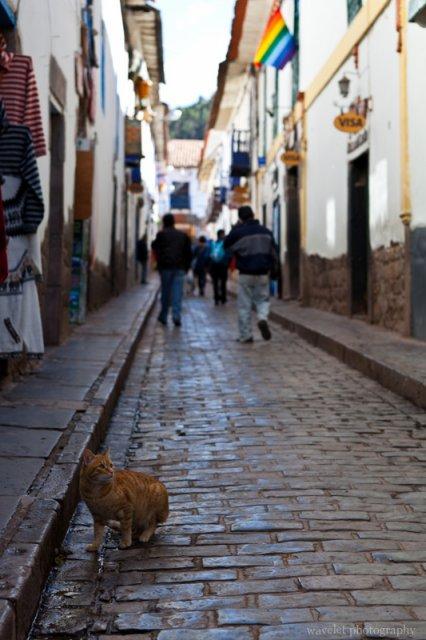 A Cat at Cusco
