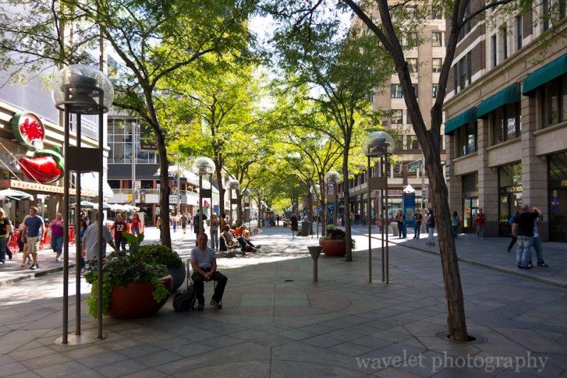 Tree-Lined Street, 16th Street Mall