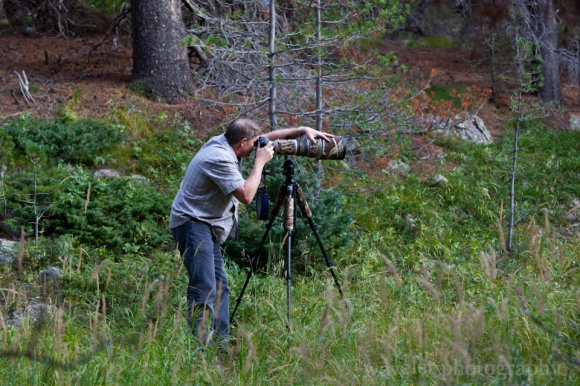 Long Lens on Moose, Bear Lake Rd., Rocky Mountain National Park