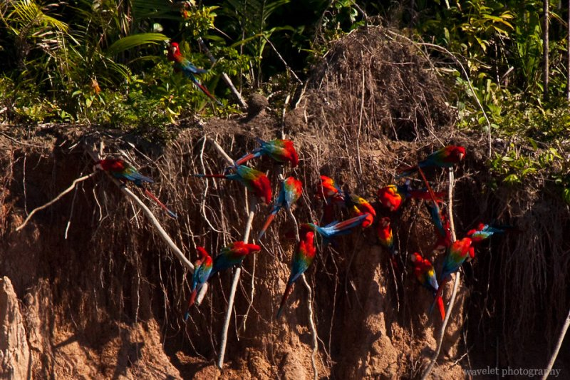 Macaws' Clay Lick
