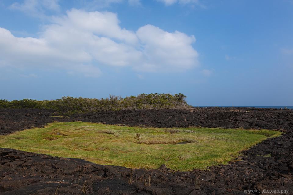 Punta Moreno, Isabela Island