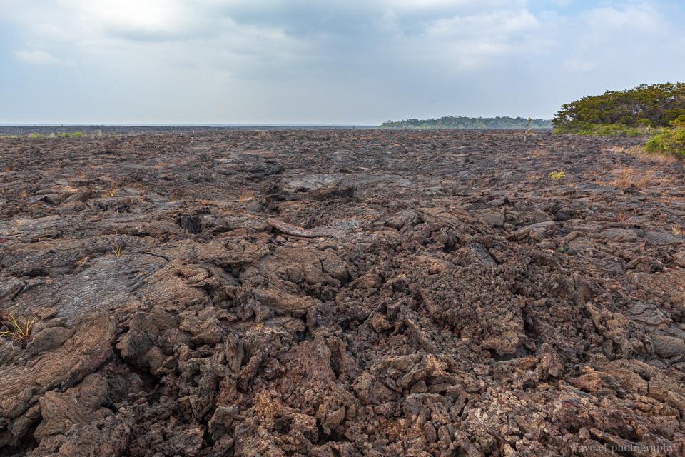 Lava field, Punta Moreno, Isabela Island