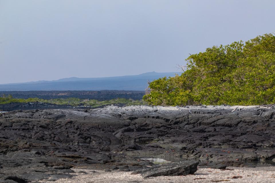 Rocky shore, Punta Espinoza, Fernandina Island