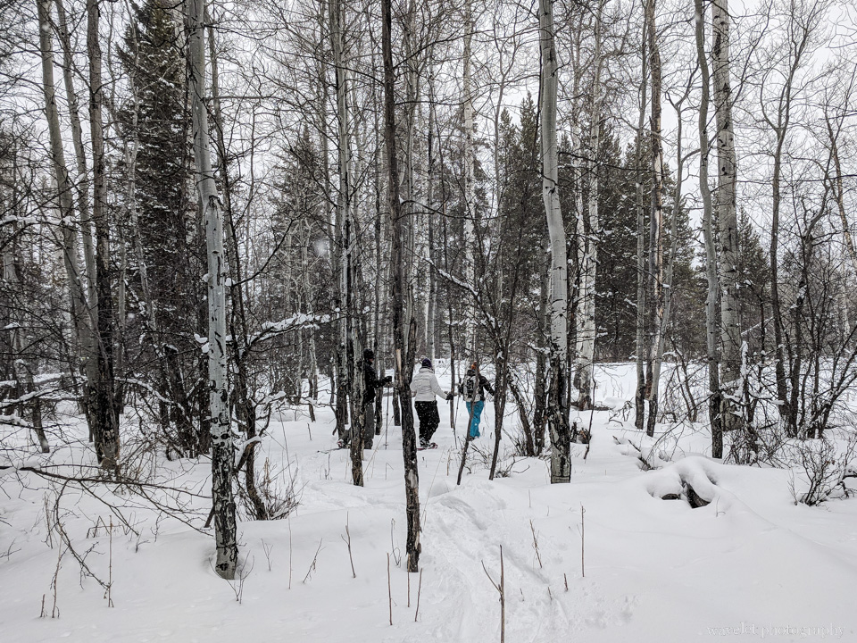 Snowshoe Excursion
