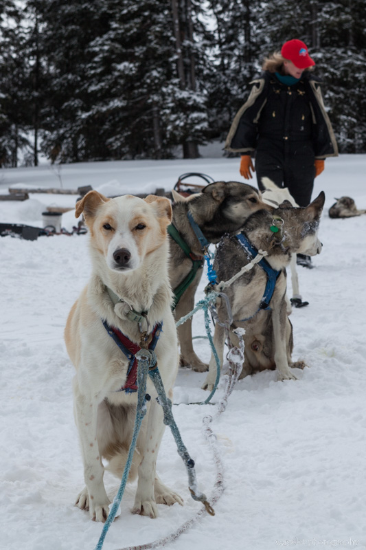Continental Divide Dogsledding, Togwotee Mountain