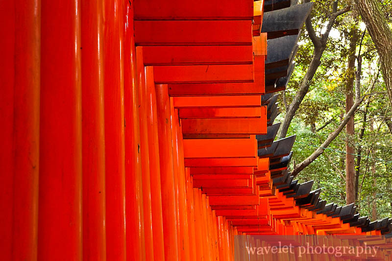 Fushimi Inari Shrine (伏見稲荷大社)