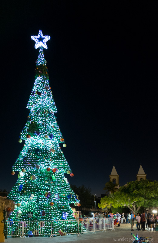 Christmas tree in Mijares Square, San José del Cabo