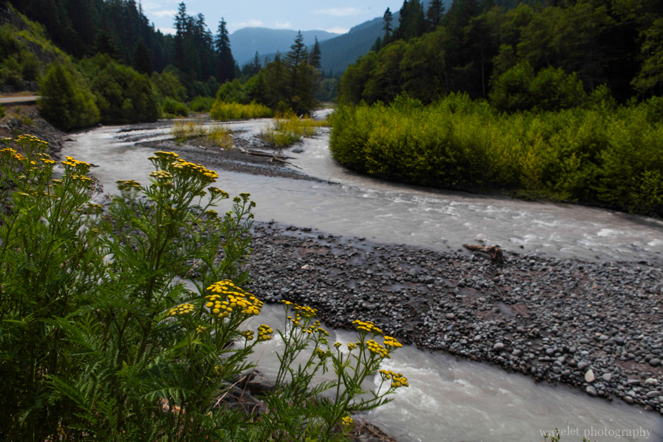 White River, Mt. Rainier