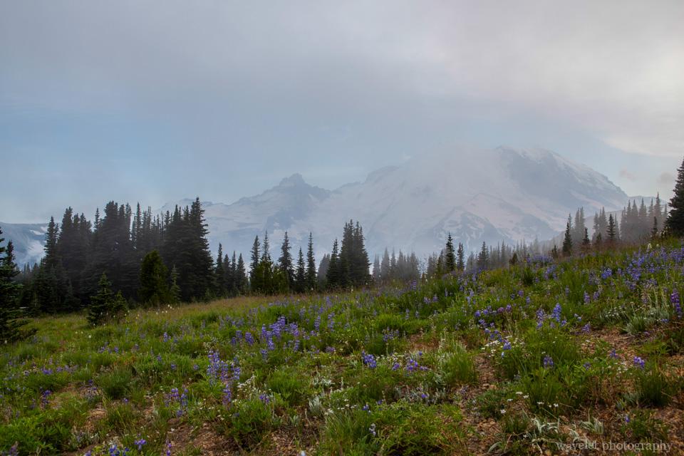 Sunrise, Mt. Rainier