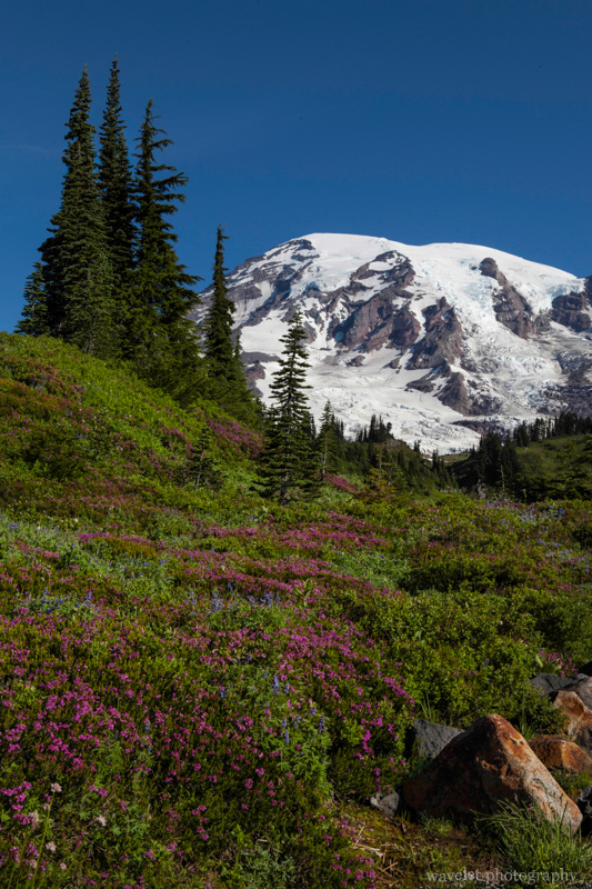 Skyline Trail, Paradise, Mt. Rainier