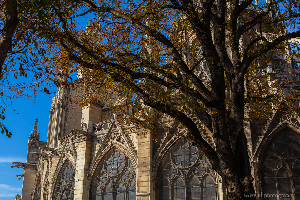 Notre-Dame in autumn, the eastern side of the cathedral, Paris