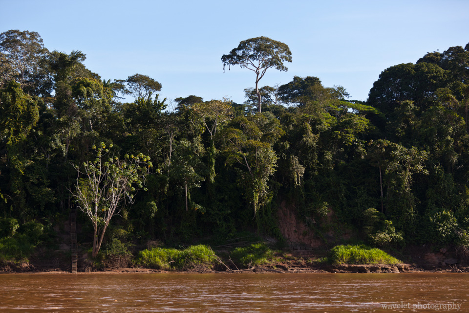 Rainforest along the Tambopata River