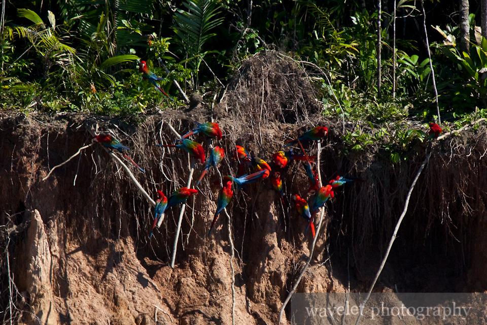 Macaws\' Clay Lick