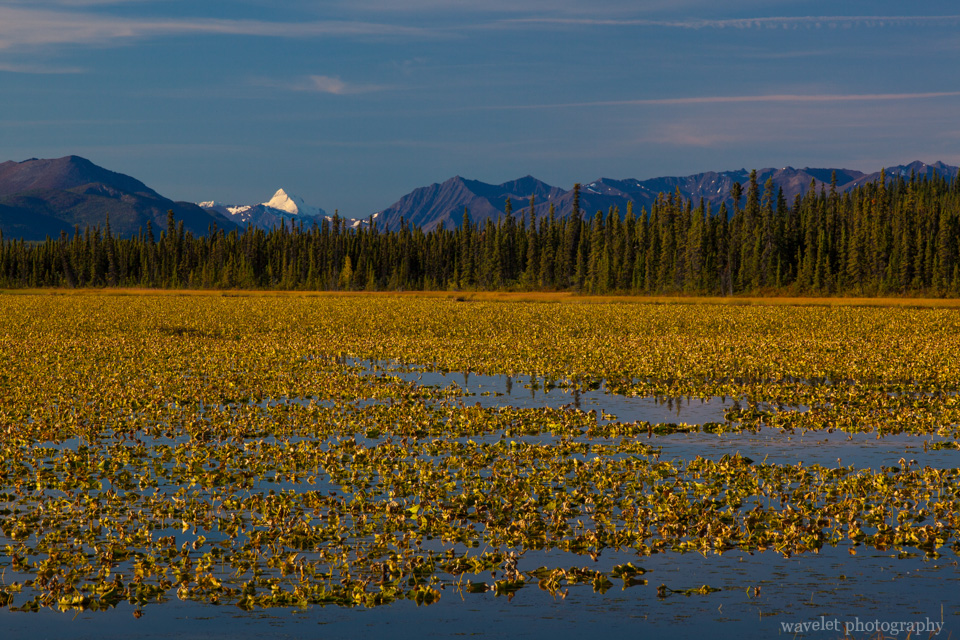 A lake in sunrise, 10 miles west to Glennallen, Alaska